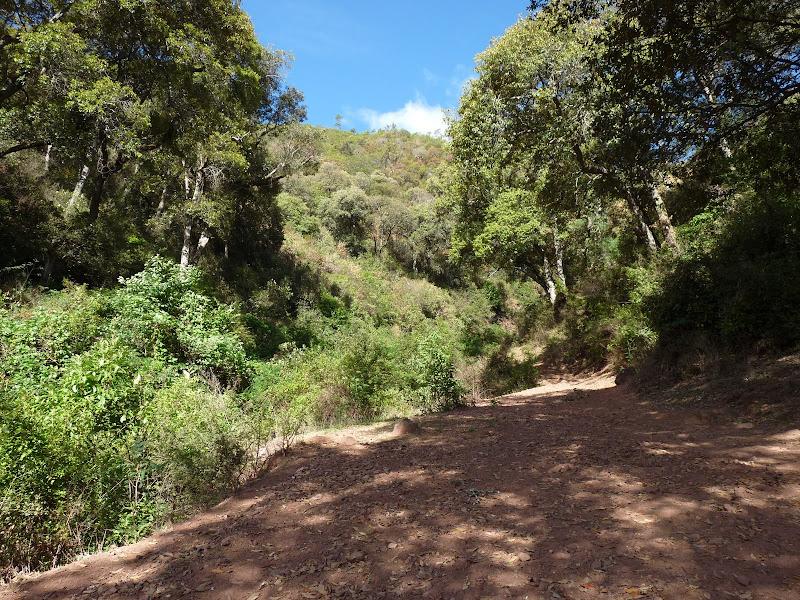 je pars  en randonnée accompagné C'est le début d'une authentique route du thé Il y en a d'autres aussi