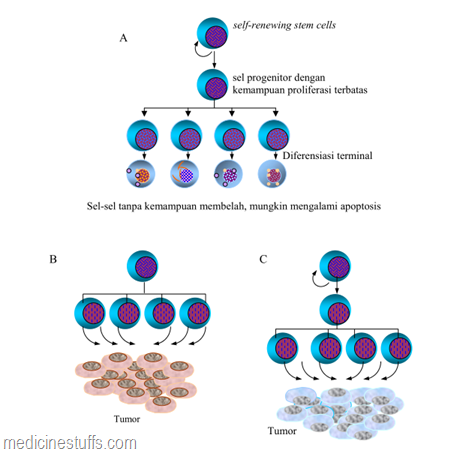 produksi-sel-normal-dan-proliferasi-tidak-terkontrol