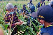 Kerjasama BPP Watangpulu Sidrap, Sebanyak 30 Petani Kembali Dilatih Pengendalian Hama Tanaman Jagung