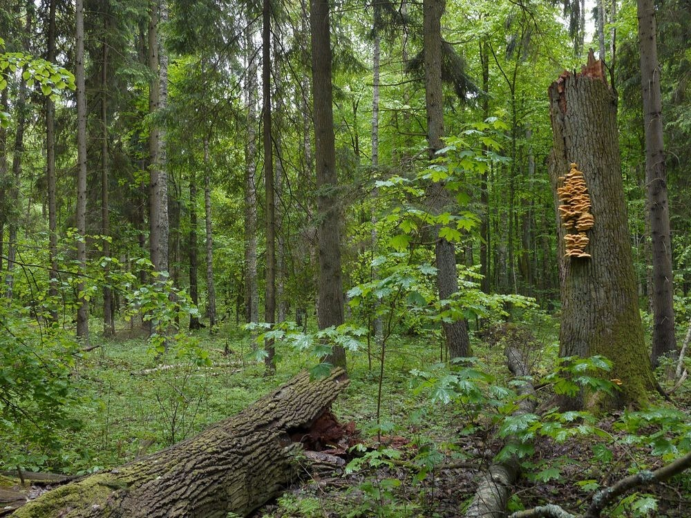 bialowieza-forest-3