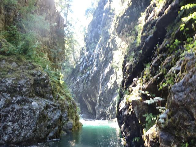 Ross Lake July 2014 - P7110125.JPG