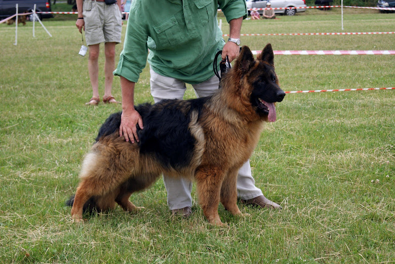 Wystawa psów - dsc00329.jpg