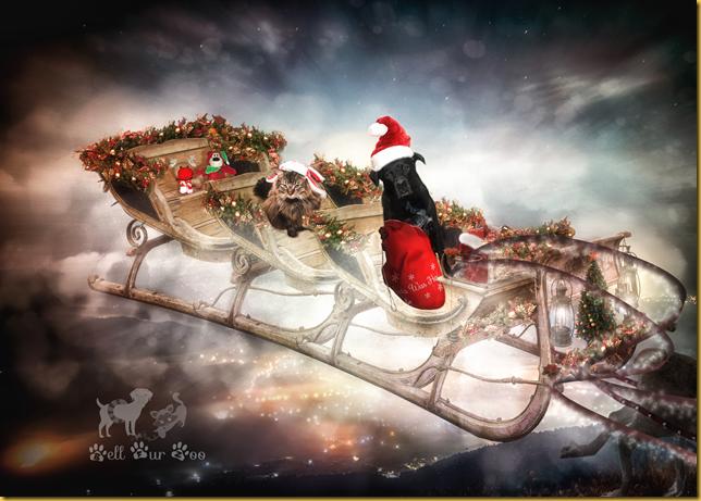 Matt & Matilda in Santa's sleigh (Copyright Jenny @Bell Fur Zoo)