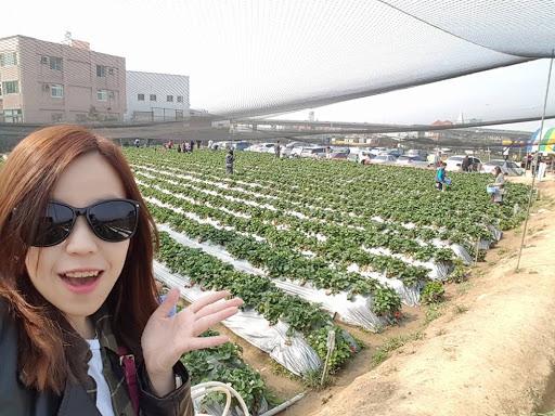 Starting strawberry picking adventure at Taichung