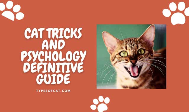 Cat tricks and psychology Definitive guide: Teach tricks like high five