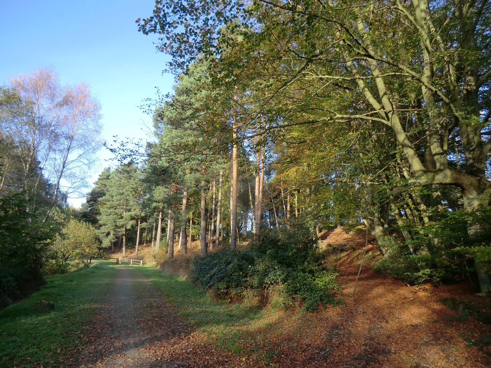 CIMG5694 Birchden Wood