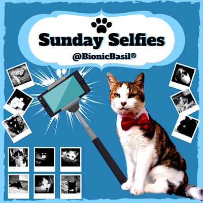 The B Team Sunday Selfies @BionicBasil ®
