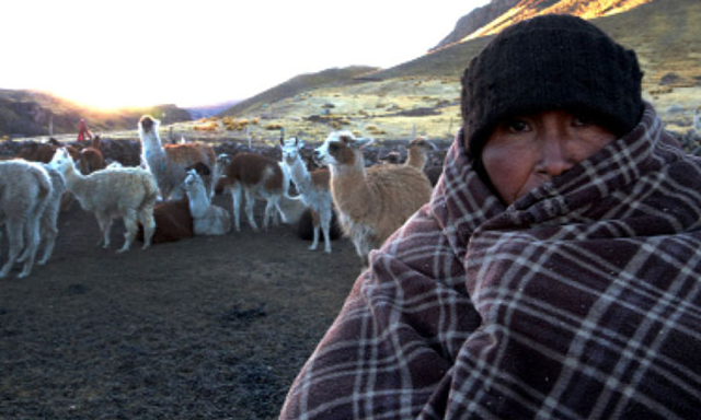 A farmer in the Southern Andes stand with his alpacas and llamas during the anomalous cold wave in July 2016. Photo: El Comercio / Strange Sounds