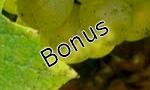 Muscadet Bonus