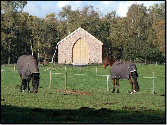 0209horses