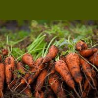 農サポ エイジア プロジェクトのイメージ