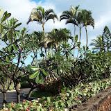 Hawaii Day 6 - 114_1741.JPG