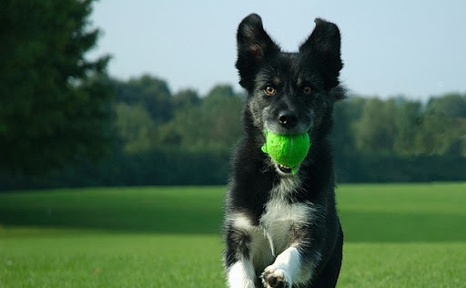 dog-training photo:dog training wisconsin