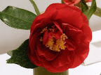 暗紅色 八重〜獅子咲き 中輪 錦魚葉