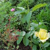 Gardening 2010 - 101_1440.JPG