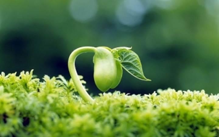 Bông lúa trĩu hạt