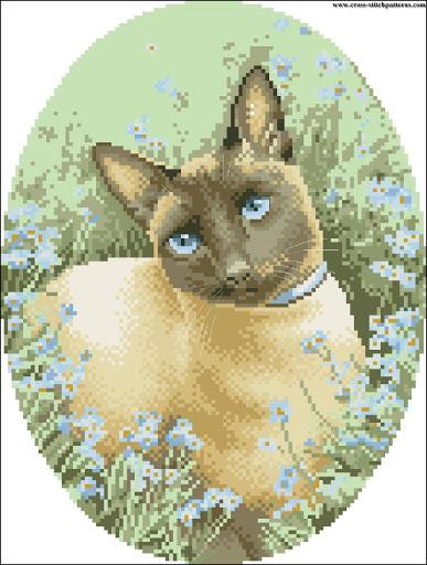 Siamese Cat chart