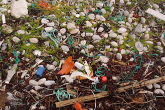Photo: Broken up plastic. An endless number of small pieces of plastic can be found along some beaches.