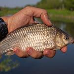 20140524_Fishing_Bronnyky_009.jpg