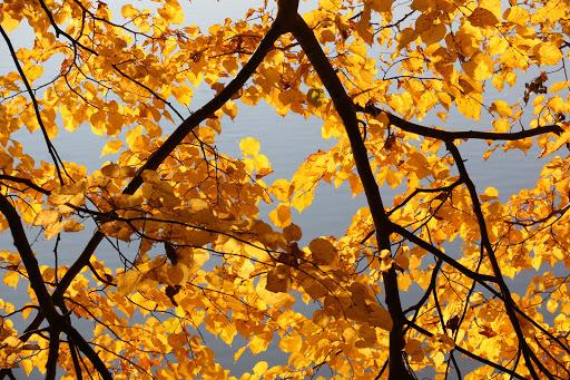 Zlaté listy jesene