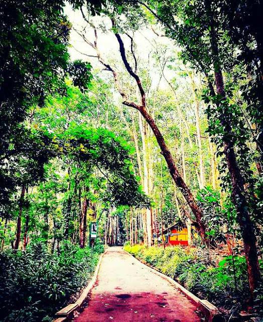 Tempat hiking taman hutan raya juanda