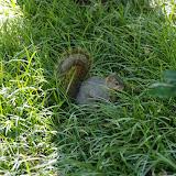 10-26-14 Dallas Arboretum - _IGP4290.JPG