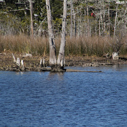 Fowl Marsh from Boat Feb3 2013 169