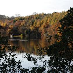 Pressmennan Woods near Stenton in Autumn