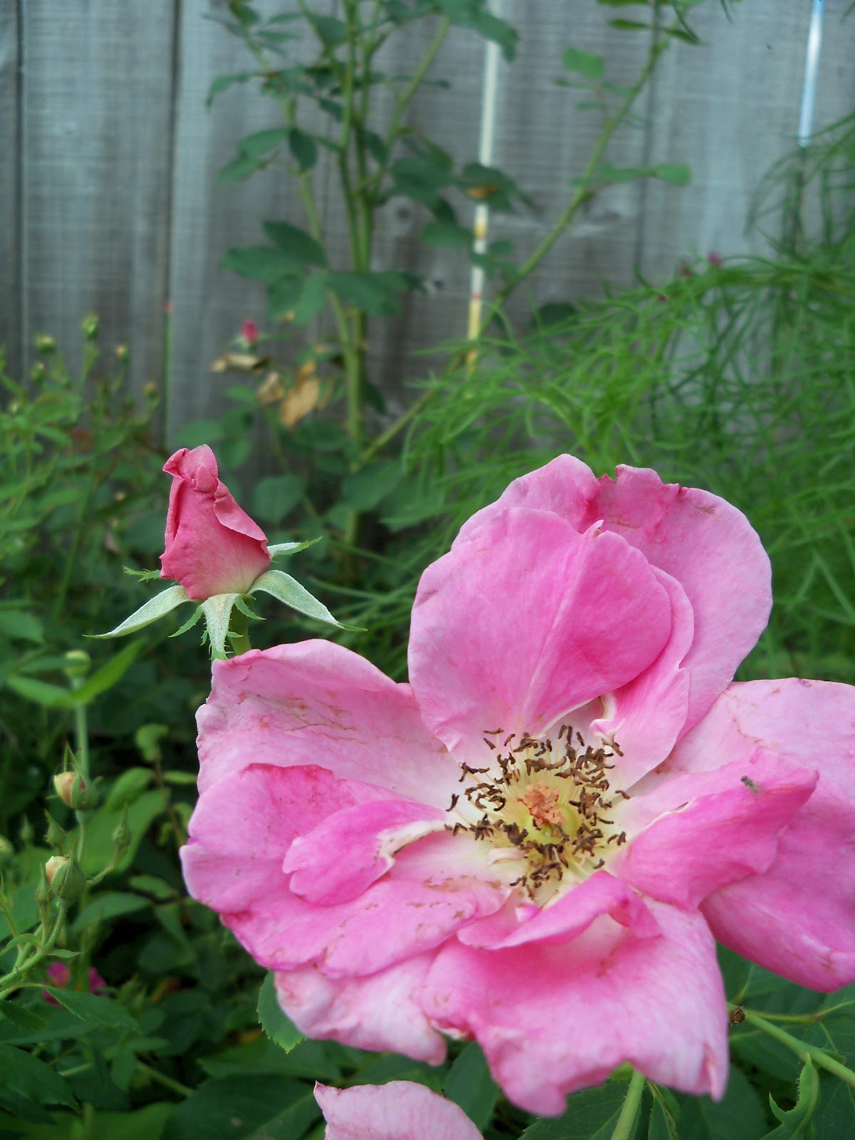 Gardening 2010, Part Three - 101_3554.JPG