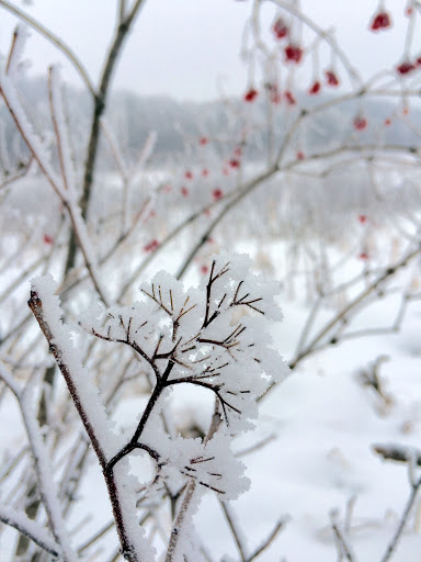 Every tiny little branch and stem coated in frost today