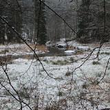 01. Januar 2016: Neujahrswanderung ins Waldnaabtal - IMG_1499.JPG