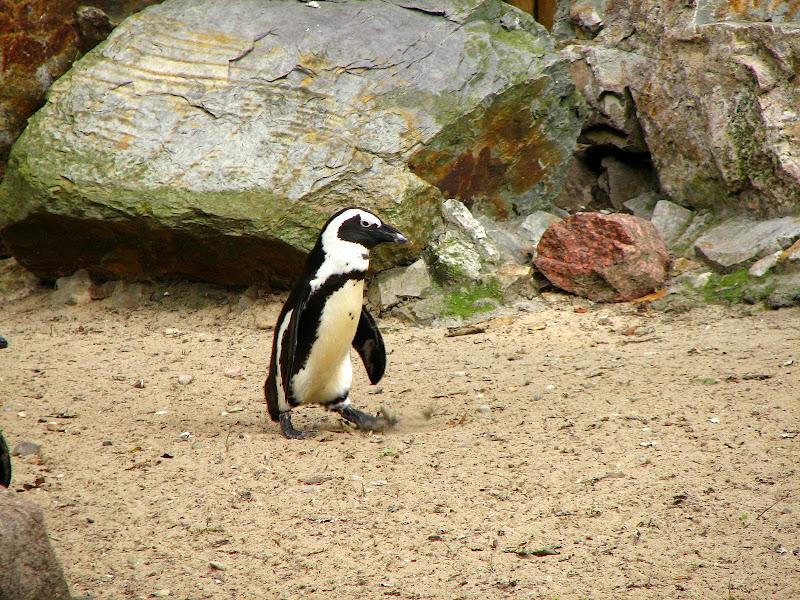 Warszawskie zoo - img_6411.jpg