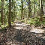 Trail near Lily Pond Picnic Area in Blackbutt Reserve (401176)