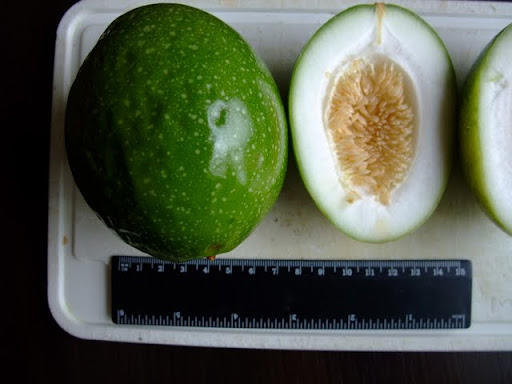 ID from fruit. Pilno%252520vaisiaus%252520foto