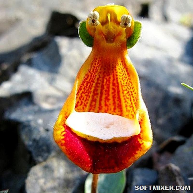 Самые причудливые и уникальные растения