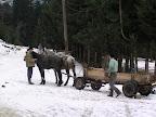 Κάρο με άλογα στη Ρουμανία
