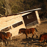 Sortida Castellterçol Raiers - P1000272.JPG