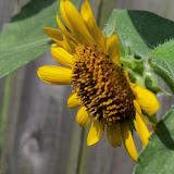 Gardening 2011 - 100_0155.JPG