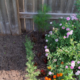 Gardening 2010, Part Two - 101_1870.JPG
