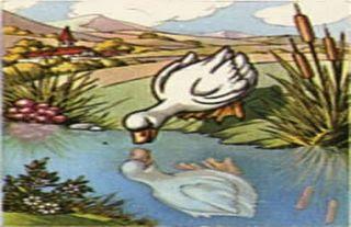 esopo mini cuento: EL cisne tomado por ganzo