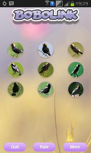 食米鸟唱歌