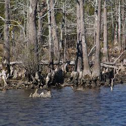 Fowl Marsh from Boat Feb3 2013 170