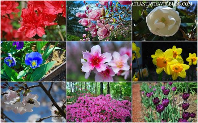 https://lh3.googleusercontent.com/-DCbLXl97ViY/UyzaT-XDtRI/AAAAAAAAG_U/oJCqKTKM6y0/s640/watch-spring-flowers-in-atlanta.jpg