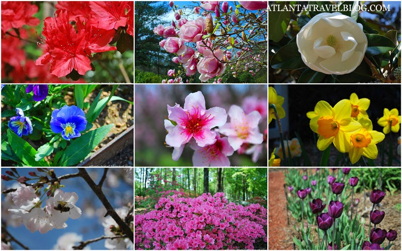 watch the spring flowers in Atlanta