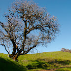 Russian Ridge, Borel Hill