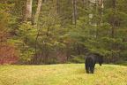 NE PAS VENDRE LA PEAU DE L'OURS? La mère de cet ourson se trouve sans doute dans les parages !