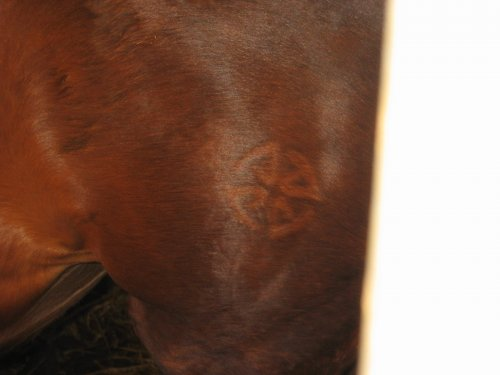 Voor er de chip was, kregen de paarden een brandmerk.
