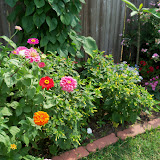Gardening 2011 - 100_8618.JPG