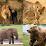 India Wildlife Tours's profile photo