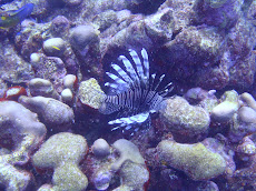Lion Fish (we think)